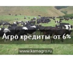 Черно-пестрые бычки